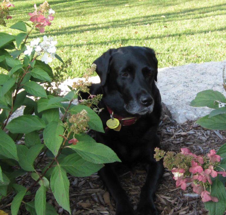 Basil in flowerbed